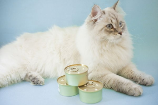 Cat sat next to tins of food